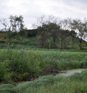 Унікальна знахідка на сільському городі в Заріцьку